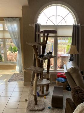 Extra large cat tree and scratching stick separately