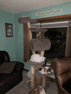 7 ft cat tree