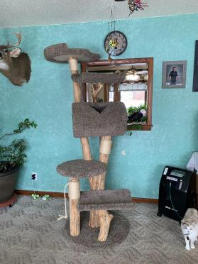 Extra Tall Cat Tree Tower Photos