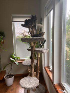 Five Level Cat Tree with Two Scoop Beds and Three Flat Beds