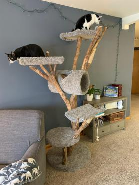 Spacious Tall Combo bed tree