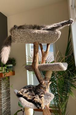 Kitties on the Four Level Tree