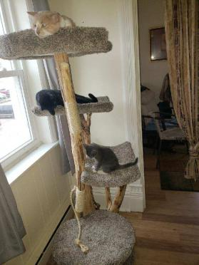 Four Level Cat Tree Photos