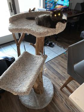 Three Level Cat Tree Photos