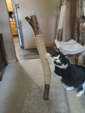 "32"" Sisal Scratching Post"