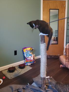 "32"" Scratching post"
