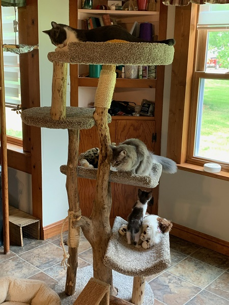 Cat perched on cat tree.